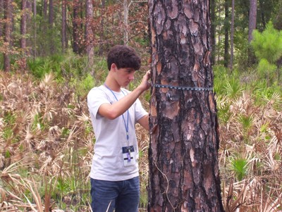 "Students measure trees and calculate the amount of carbon stored in individual trees as part of the PINEMAP/PLT Secondary Module activity ""Counting the Carbon"". Photo courtesy of Jessica Ireland"